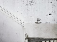 Cat On Staircase Against Wall