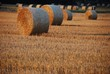 canvas print picture - Hay Bales On Agricultural Field