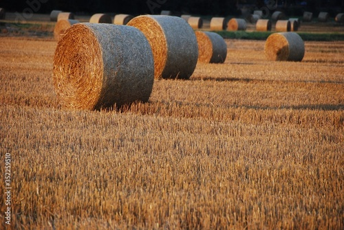 Canvas-taulu Hay Bales On Agricultural Field