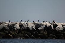 Cormorants Perching On Rocks In Sea Against Sky