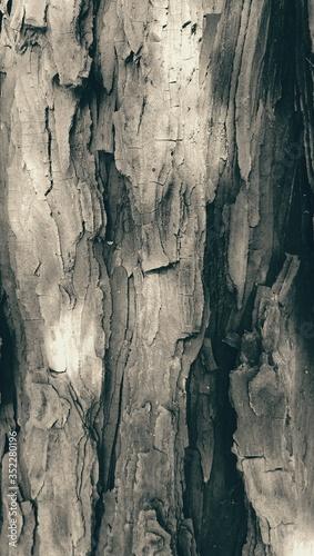 Obraz na plátně Full Frame Shot Of Tree Trunk