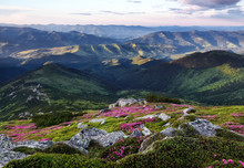 Amazing Spring Mountain Scenery. A Lawn Covered With Flowers Of Pink Rhododendron. Natural Landscape With Beautiful Sky. The Revival Of The Planet.