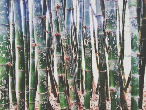 Photographie Detail Shot Of Bamboos