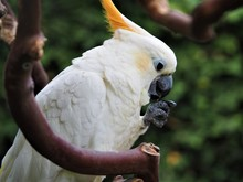 White Parrot With Beak And Claw