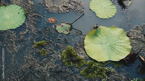 Valokuva High Angle View Of Water Lily In Lake