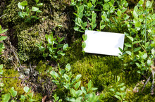 Business Card Mock Up Concept On Forest Green Moss. Blank White Paper Card On Mossy Rock Texture Woodland Nature Hunt Background With Copy Space