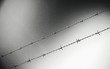 canvas print picture Close-up Of Barbed Wire