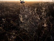 Spider Web On Field