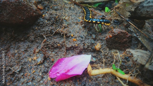 Foto High Angle View Of Pink Petal And Centipede On Field