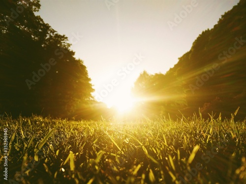 Low Angle View Of Sunlight Falling On Grass At Hirschpark Against Sky #352365945