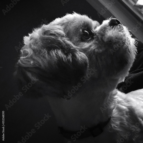 Fototapeta Close-up Of Dog At Home