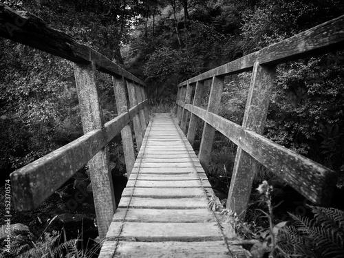 Fotografie, Tablou Old Bridge In Forest