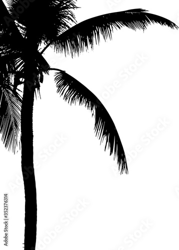 Grunge silhouette palm tree. Black and white vector illustration. Wall mural