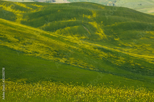 Obraz Scenic View Of Agricultural Field - fototapety do salonu