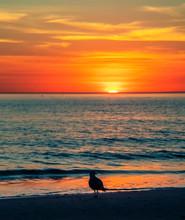 Sunset On The Beach, Sea, Sun,...