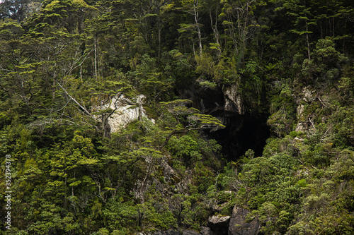Wild cave and forest of Milford Sound New Zealand