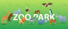 Zoo Animals On Green Backgroun...
