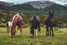 Patagonia Wildlands