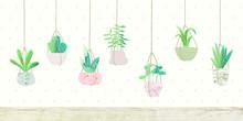 Botany Hanging Cactus Collecti...
