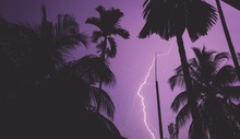 Low Angle View Of Silhouette Trees Against Sky With Lightning