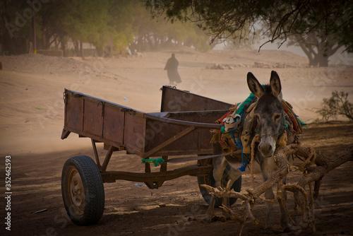 Fotografía Paesaggio rurale