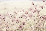 Close-up Of Flowering Plants On Field - 352464156