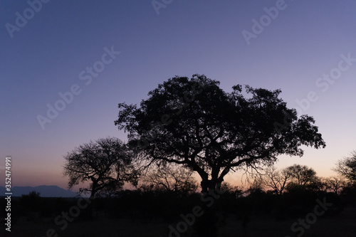 Silhouette Tree On Field Against Clear Sky During Sunset