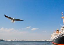 4月の横浜港にいるカモメ達