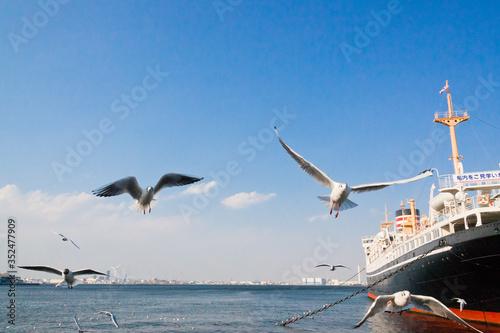 4月の横浜港にいるカモメ達 © sea-walker