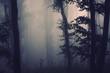 Leinwanddruck Bild dark mysterious scary woods, trees in dark forest background