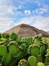 Cactus Growing Against Pyramid
