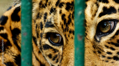 Photo Close-up Of Leopard In Cage