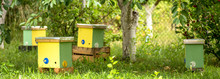 Nuc Hive In Garden On Green Grass. Beekeeping And Queenbee-breeding For Artificial Insemination. Breeding For Mated Queen And Virgin Queen