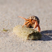 Close-up Of Hermit Crab On Sto...
