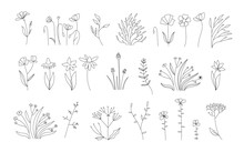 Sketch Floral Botany Collection.Wedding Flowers Blossoming. Outline Vector Set Of Different Flowers. Black And White With Line Art On White Backgrounds. Hand Drawn Illustrations. Vector. Vintage Style
