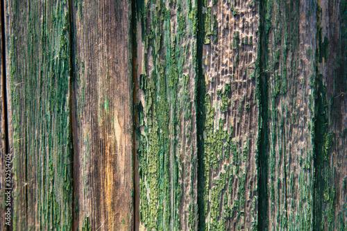 Obraz na plátně Full Frame Shot Of Tree Trunk In Forest