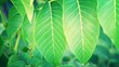canvas print picture - Green Leaves