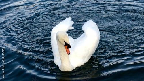 Cuadros en Lienzo High Angle View Of Swan Swimming On Lake