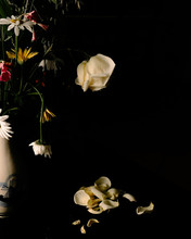 Yellow Rose, Daisy And Daffodils In Vase On Black Background