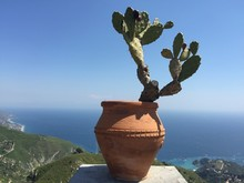 Potted Prickly Pear Cactus Against Sky