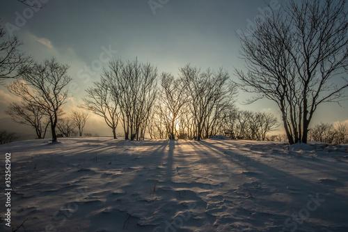 Valokuva Bare Trees On Snow Covered Land Against Sky