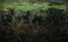 Close-up Of Fresh Green Leaves Floating In Water