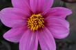 Leinwanddruck Bild - Close-up Of Pink Flower Blooming At Park