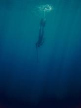 Freediver Descending