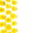 Flowers composition. dandelions on white background. Spring concept. Flat lay, top view copy space. yellow