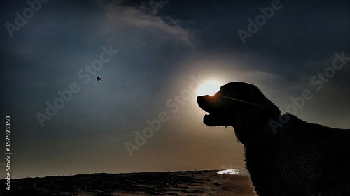Photo Silhouette Dog On Beach Against Sky At Sunset