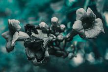 Des Jolies Fleurs Grises Avec ...