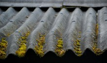 Moss On Corrugated Iron Roof