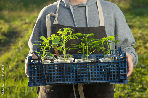 woman in backyard with seedling plant, gardening concept #352623145
