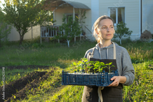 woman in backyard with seedling plant, gardening concept #352623348